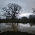 winter dawn by arie neuhauser