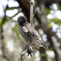adam bowes  darwins finches the root of modern evolutionary theory galapagos islands