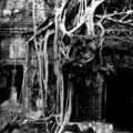 adam bowes  it is in the roots not the branches that a trees greatest strength lies cambodia  first prize