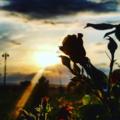 gulnar abdullayeva  sunshine source of the life