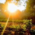 into the light indrajeet sahu