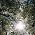 kla karava  the tree of life
